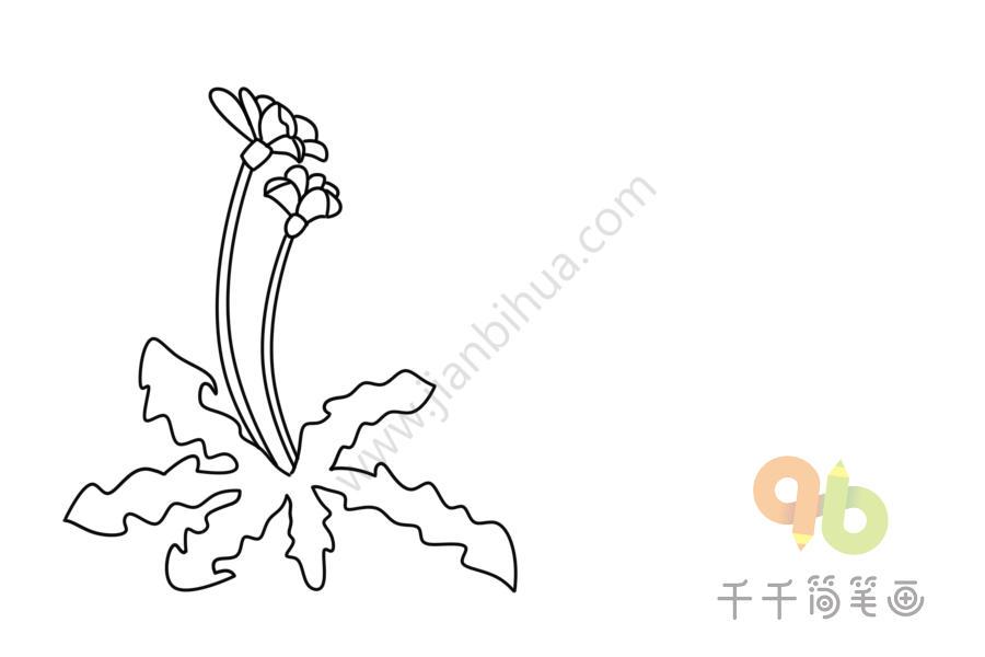 各种各样的花朵简笔画大全集