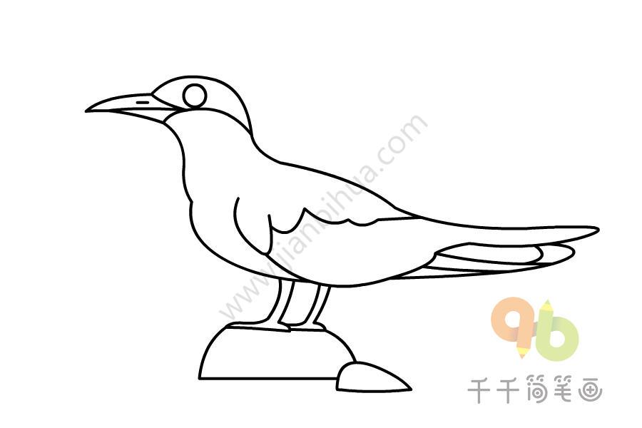 黄嘴河燕鸥简笔画步骤图