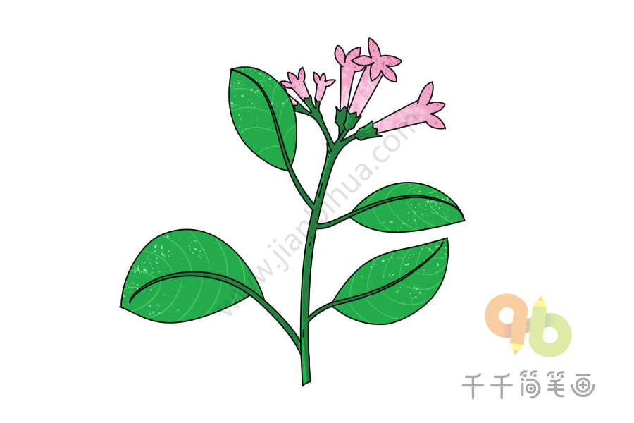金鸡纳树简笔画教程 花朵 千千简笔画