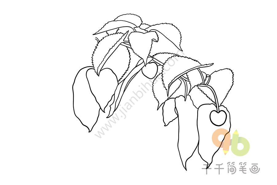 珙桐简笔画图片   如何画珙桐   珙桐简笔画,珙桐怎么画,花朵简笔画,好看的花朵简笔画,植物简笔画,绿色植物简笔画   珙桐简笔画   珙桐怎么画