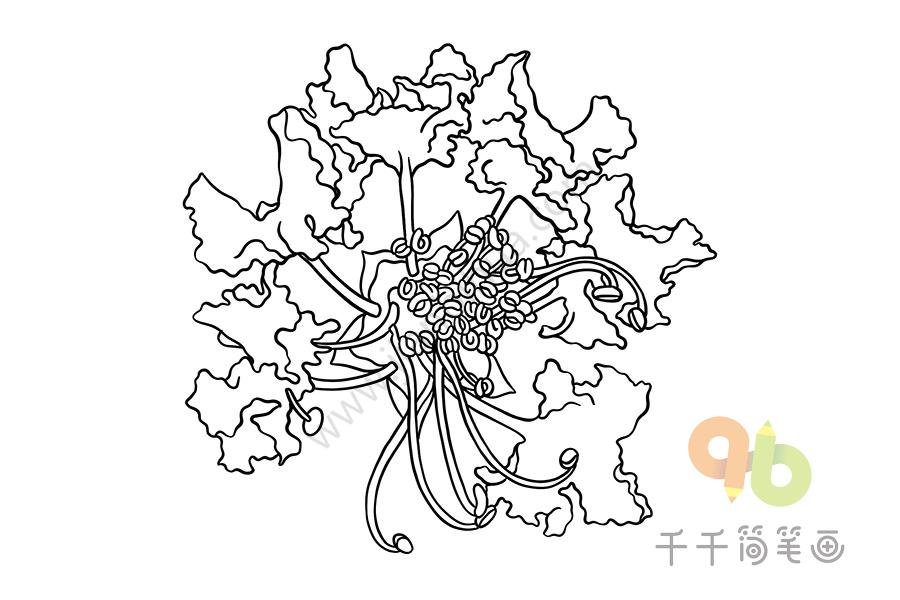紫薇花简笔画   紫薇花简笔画怎么画,花朵简笔画简单又好看,花朵简笔画图片大全,好看的花朵简笔画,紫薇花简笔画图片大全   紫薇花简笔画带步骤的   紫薇花简笔画图片过程   紫薇花简笔画图片