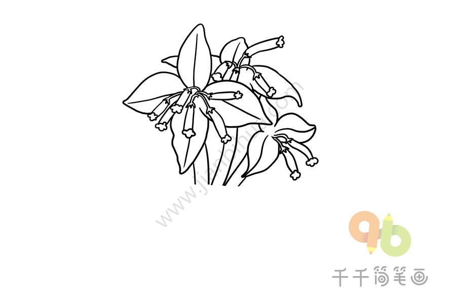 第一步:画出月宴的花朵   第二步:画出叶子   第三步:继续画出花朵与叶子