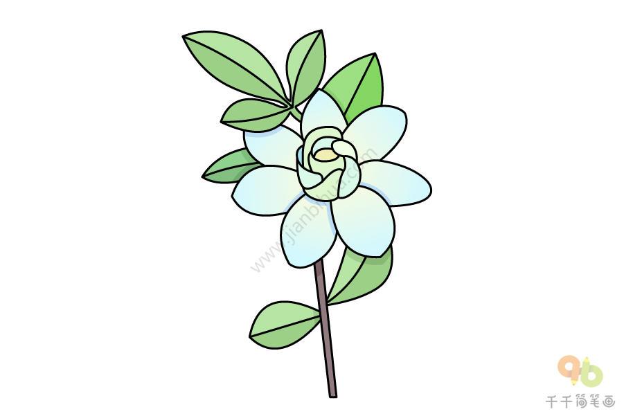 莲花简笔画简单又好看_20种好看的植物盆栽简笔画,适合室内摆放_主题简笔画简笔画