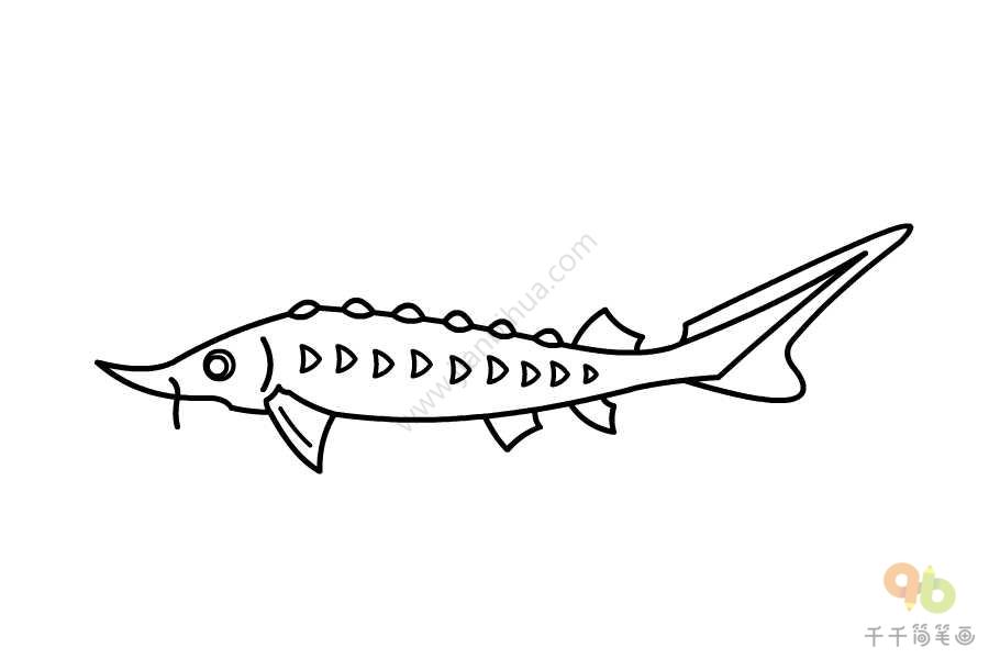 中华鲟简笔画_中华鲟简笔画图片_海洋动物简笔画